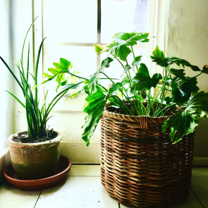 Wicker round basket with rope edging